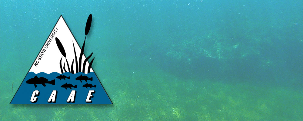 CAAE logo