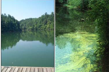 NC drinking water reservoir (left) and a cyanobacteria bloom (right)